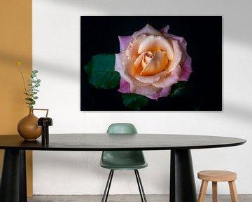Roos in pastel van Pieter Heres