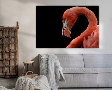 Flamingo von MSP Canvas