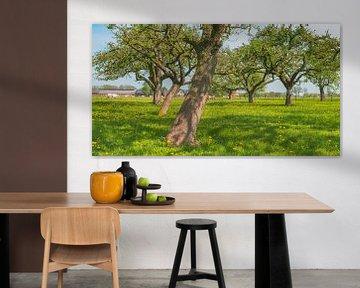 Lente in de boomgaard met oude appelbomen in een weide van Sjoerd van der Wal