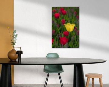 Opvallende tulp von Moetwil en van Dijk - Fotografie