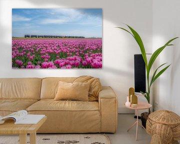 Train à travers les champs de tulipes sur Moetwil en van Dijk - Fotografie