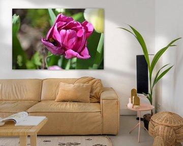 Hommel op zoek naar stuifmeel in roze tulp von Mirjam Rood-Bookelman