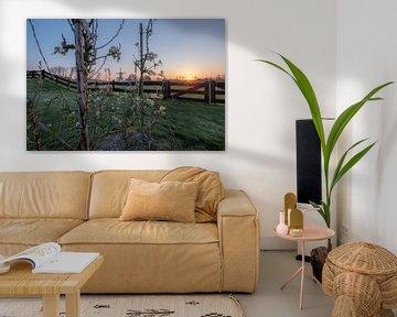 Arbres fruitiers au moulin à vent De Vlinder sur Moetwil en van Dijk - Fotografie