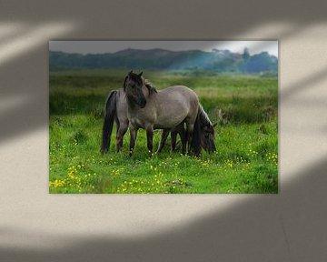 Paarden op Lentevreugd von Dirk van Egmond
