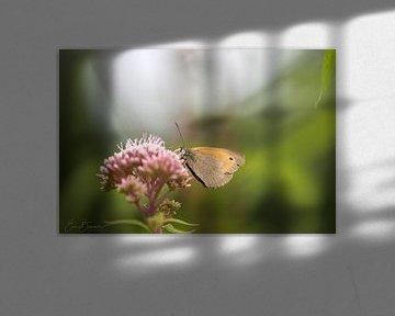vlinder op bloem von eric brouwer