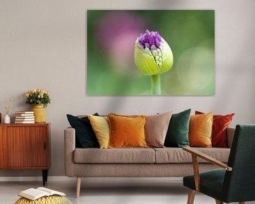 Sierui Allium bloem in knop - Keukenhof von Lindy Hageman