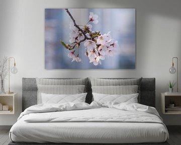 Kirschblüte in Südkorea von Tristan Lavender