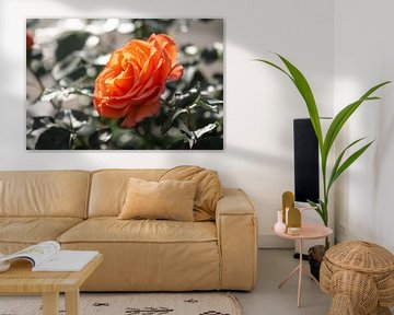 oranje roos van Tania Perneel