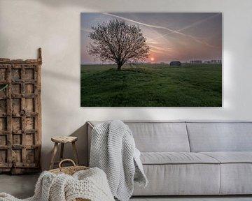 Weiland met boom en schuur bij zonsopkomst 03 van Moetwil en van Dijk - Fotografie