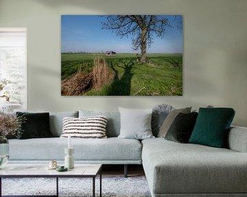 Schuur in weiland 01 van Moetwil en van Dijk - Fotografie