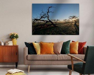 Grillige fruitbomen von Moetwil en van Dijk - Fotografie