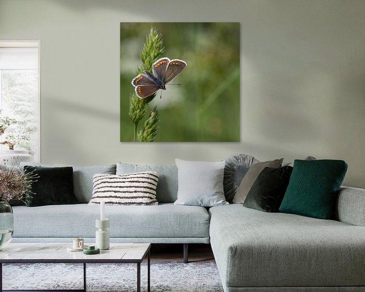 Impression: Bruin blauwtje sur Jan Jongejan