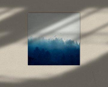 Misty Blue Forest