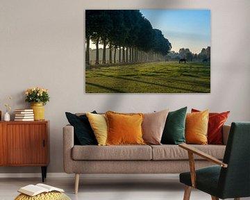 Bomenrij met paarden van Moetwil en van Dijk - Fotografie