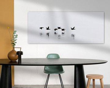 Eider ducks - Iceland van Arnold van Wijk