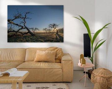 Oude grillige fruitbomen van Moetwil en van Dijk - Fotografie