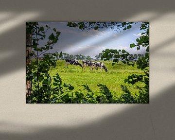 grasende Kühe von Patrick Herzberg