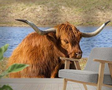 Schotse hooglander van Barbara Brolsma