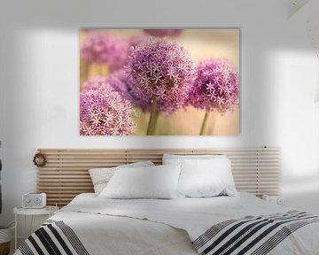 Verträumter Sommer Garten mit großen Allium von Tanja Riedel