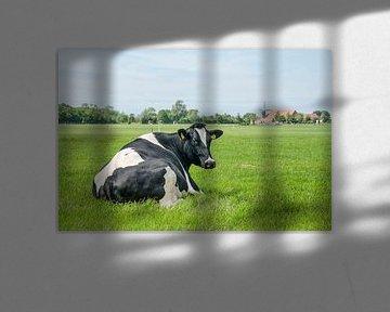 Koe op Walcheren