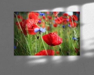 Mohnblumen von EFFEKTPHOTOGRAPHY.nl