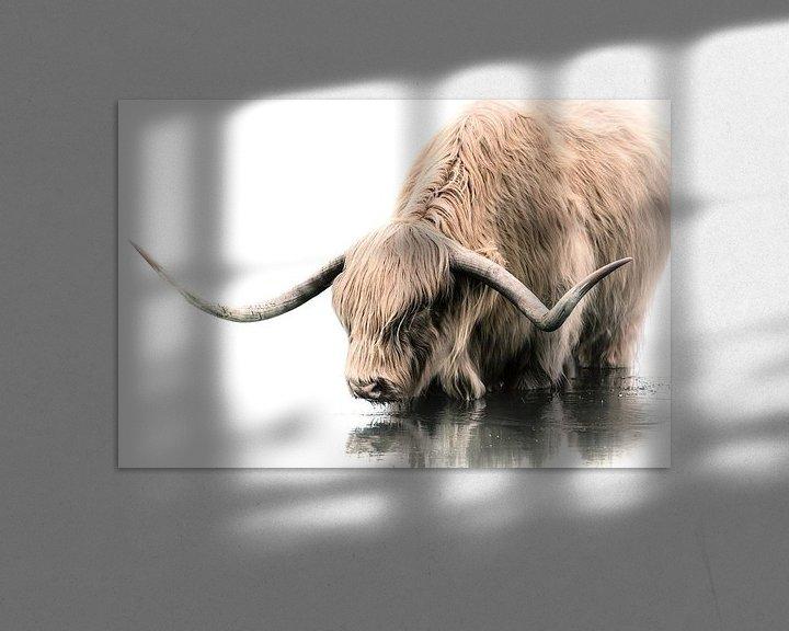 Sfeerimpressie: Schotse Hooglander van Karel Ton