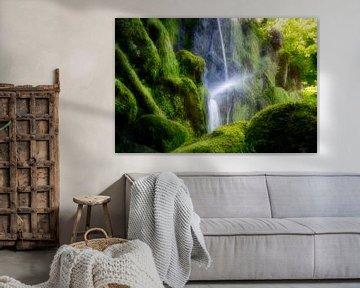 Kasseler Dschungel von Kilian Schloemp
