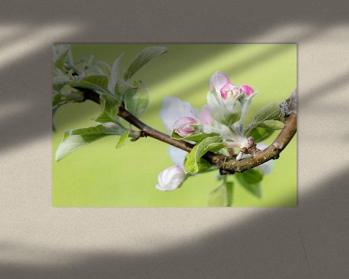 Beispiel: Appelbloesem von Daan van Oort