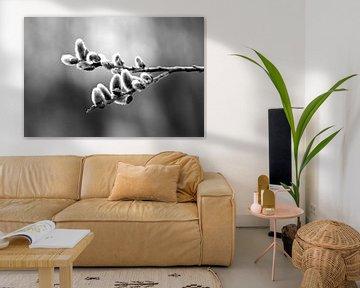 Zwart-wit foto van Elzen-katjes van Elbert Brethouwer