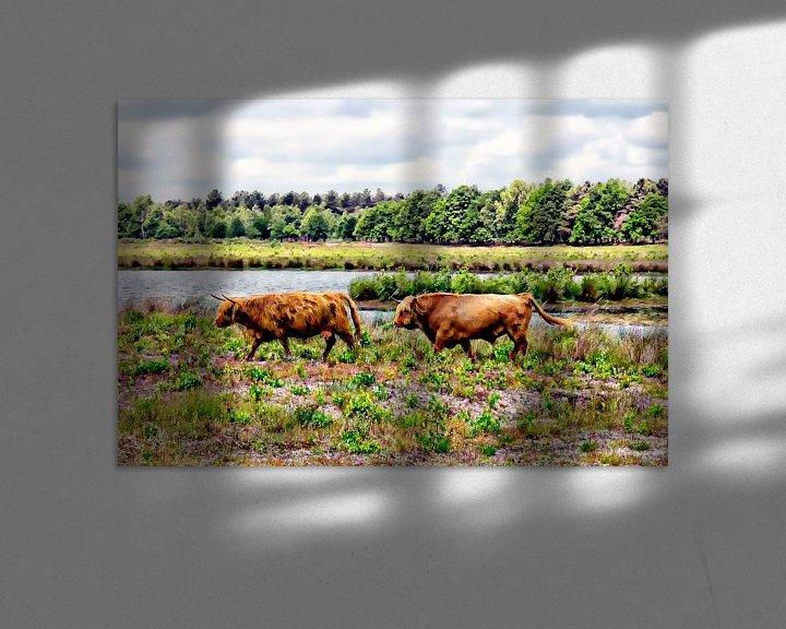 Sfeerimpressie: Paar Schotse hooglanders van Carin Klabbers