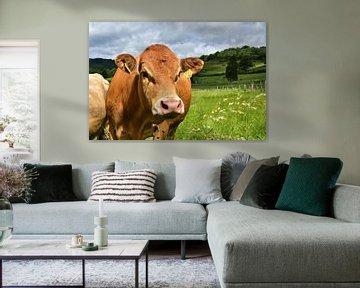 Landleben - Glückliche Rinder