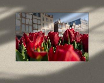 Bloeiende tulpen in Amsterdam sur Thea.Photo