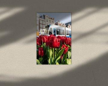 Amsterdam - tulpen en tram von Thea.Photo