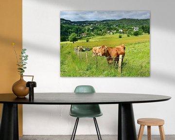 Landleben - Glückliche Rinder VI