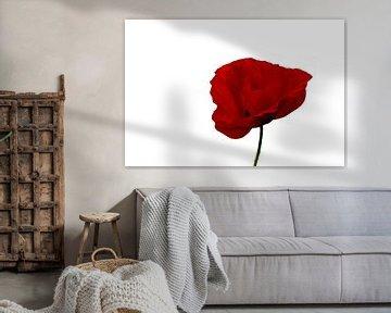 Simply Red van Judith Veenstra