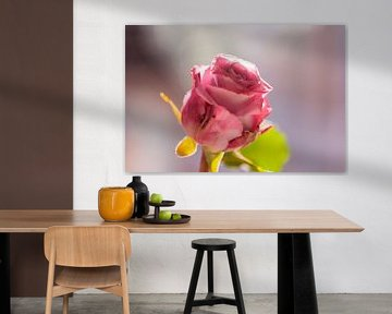 roza roze von Tania Perneel