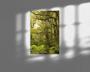 Milford Sound Regenwald / Neuseeland von Shot it fotografie