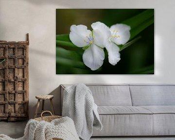 weißer Frühling von Tania Perneel