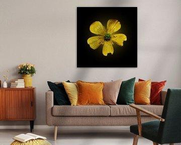 imperfect geel van Ribbi The Artist
