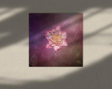 perfect roze van Ribbi The Artist