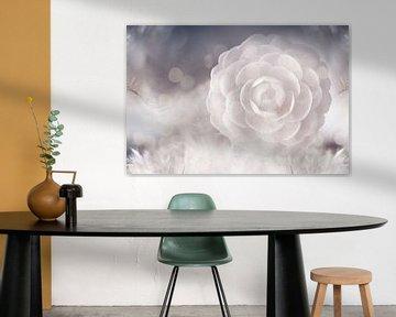 Camellia von Jacky Gerritsen