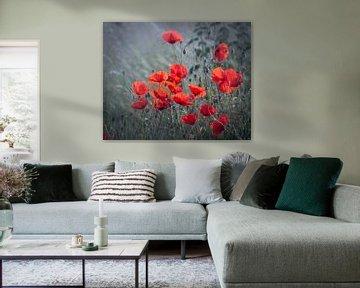 Poppy-field von Christl Deckx