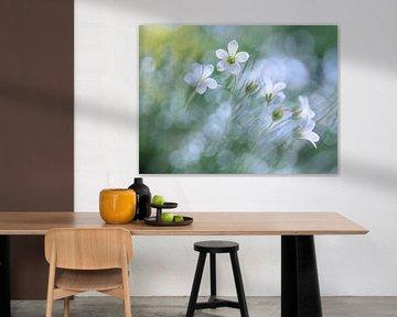 Floral joy von Christl Deckx