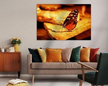 Oranje vlinder zittend op steen met bokeh sfeerlicht van Carin Klabbers