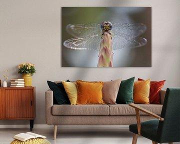 Libelle von Tim Link
