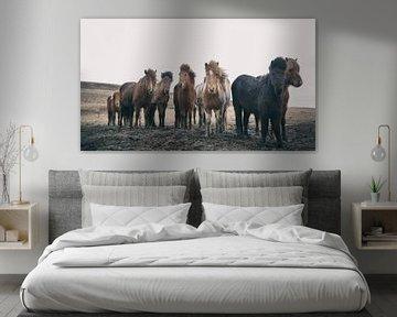 IJslandse Paarden von Gerald Emming