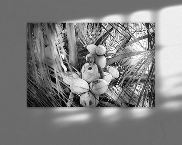 Eichhörnchen auf Bali von Mariëlle Debrichy