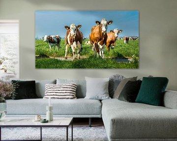 Nieuwsgierige koeien van Danny den Breejen