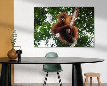 jonge orang oetan van Wesley Klijnstra