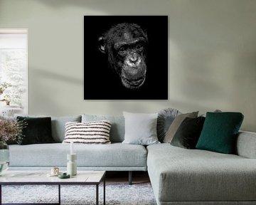 Schimpanse in Schwarz und Weiss von Emajeur Fotografie